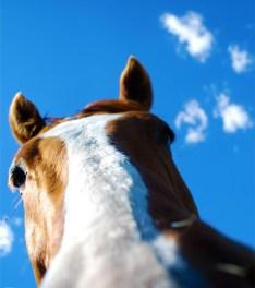 Budenheim: Reiterloses Pferd läuft gegen Bus