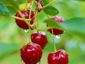 Die süßesten Früchte wachsen an fremden Bäumen