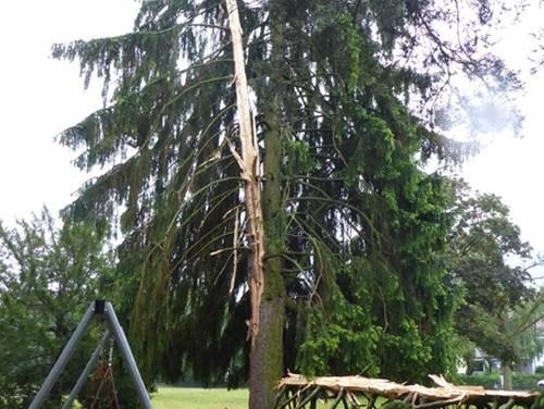 Der Blitz schlägt in 25 Meter hohe Fichte in Gonsenheim ein