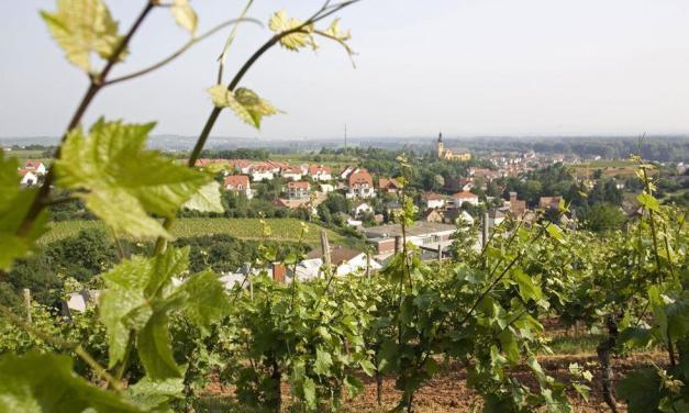 Nackenheim Weinfest im fröhlichen Weinberg