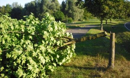 Vandalismus entlang der Georg Taulke Allee in Nieder-Olm