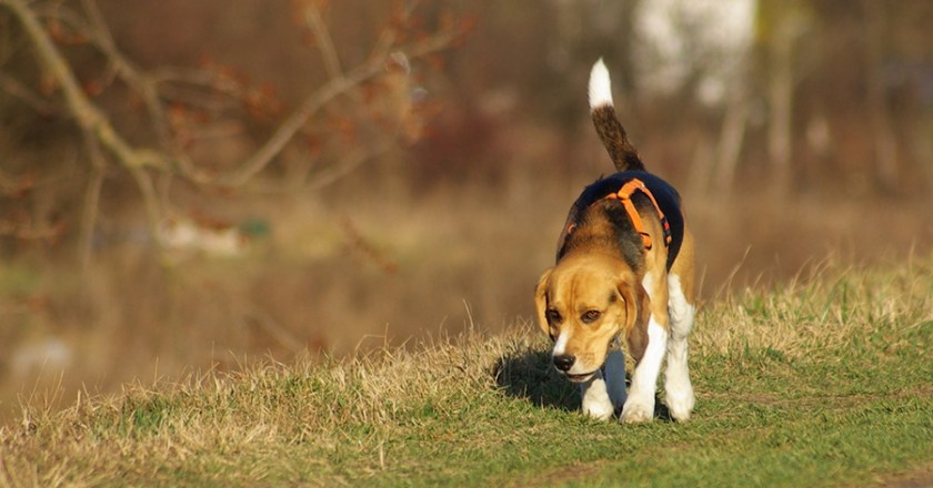 Polizei rettet Hund von der Autobahn