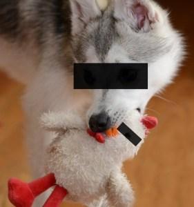 Das Problem bei einem Hund ist IMMER am OBEREN Ende der Leine zu finden