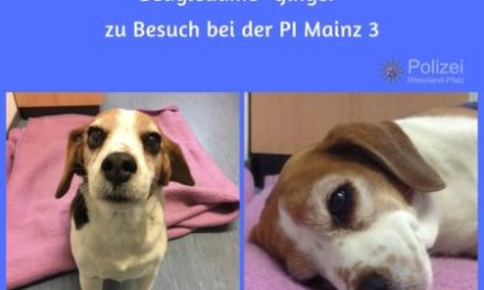 "Who let the dogs out? – Polizei bringt Beagle-Dame ""Ginger"" nach Hause"