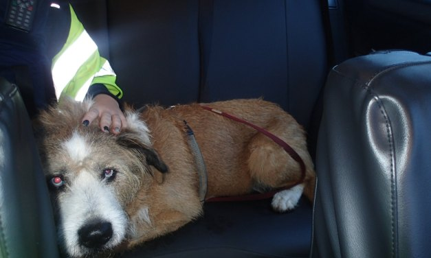 Hund verursacht Unfall auf der A61