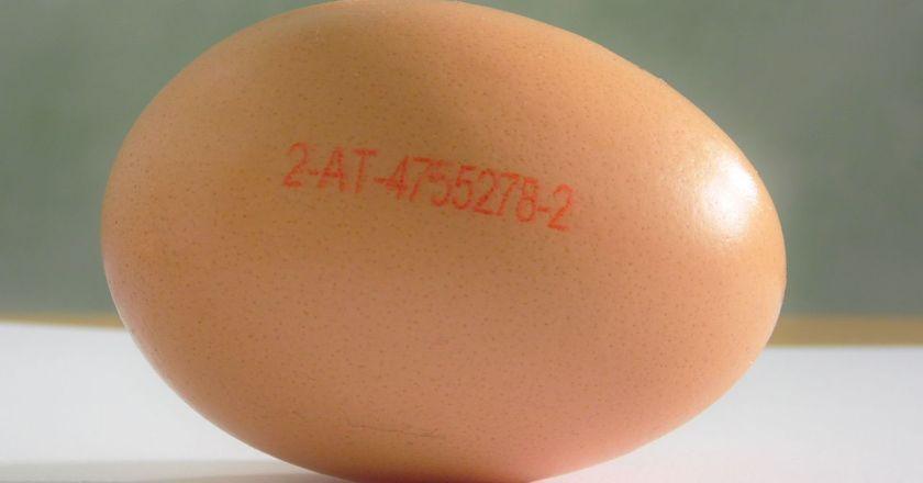 Woher kommen eigentlich die Eier?