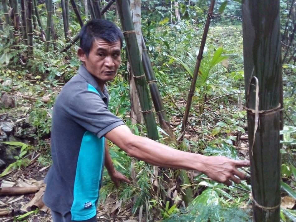 Mujimin: Tiap Ulang Tahun Tanam Bibit Bambu