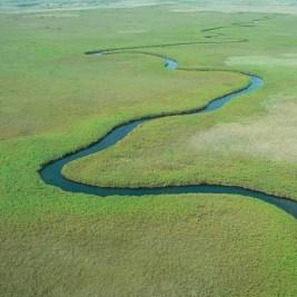 ein fluss durch das okavango delta, eine aufnahme aus der Vogelperspektive, hauptsächlich grünes land durch das sich ein fluss schlängelt