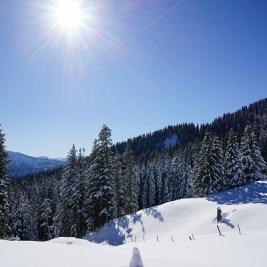 Tiefschnee im Vordergrund, weiß bepuderte Bäume und Berge und ein strahlendblauer Himmel mit Sonnenschein