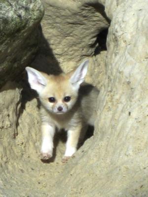 fox2display