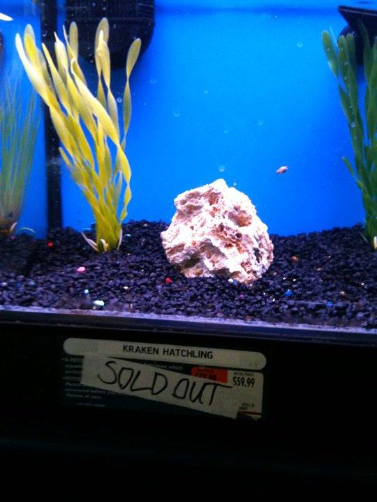 Kraken Hatchling aquarium