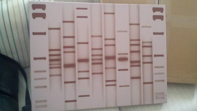 My Little DNA