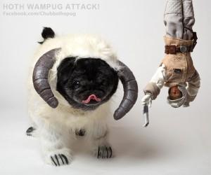 Chubbs the Wampug