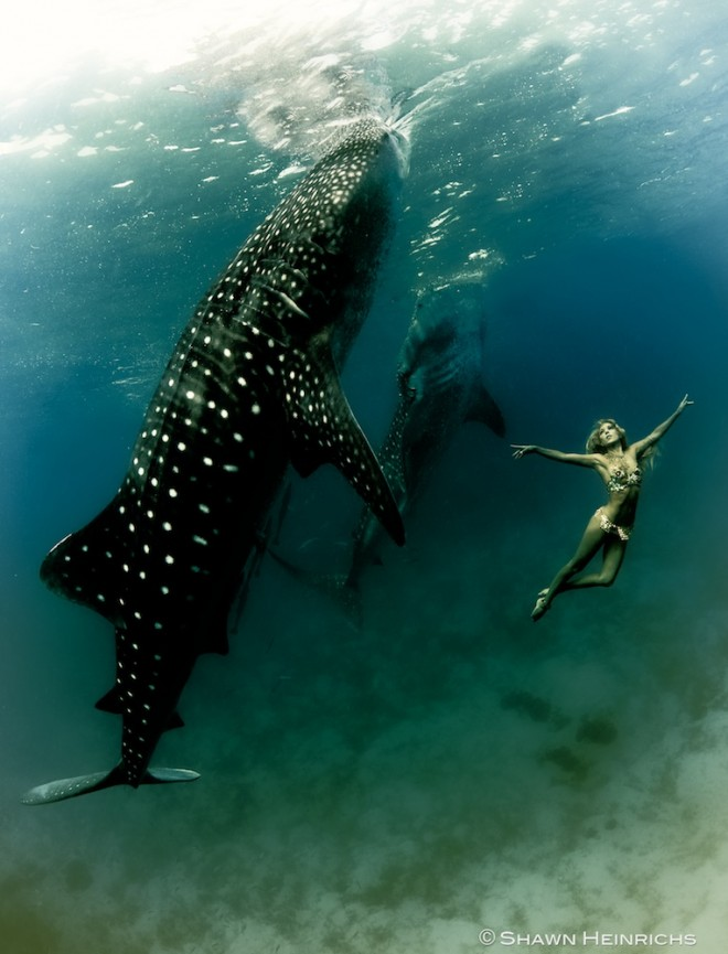 swimming with whale sharks, whale sharks Philippines, swimming whale sharks Philippines, swimming whale sharks Oslob, Shawn Heinrichs photography