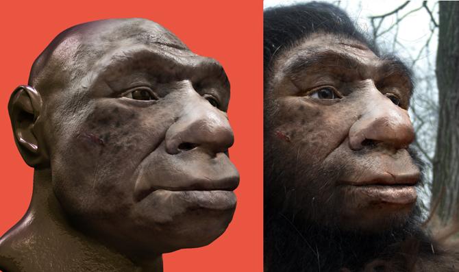 heidelbergensis-s