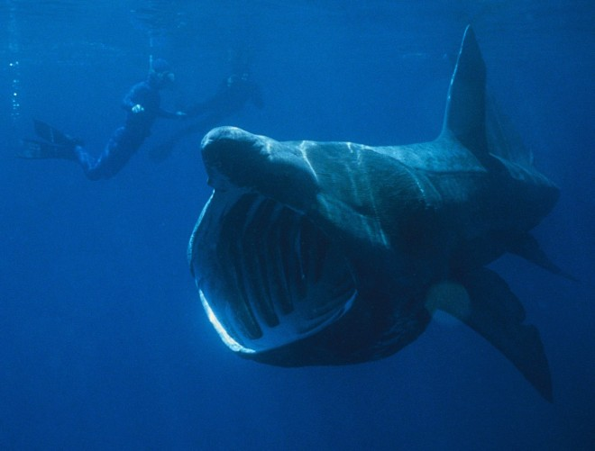 Ugly shark