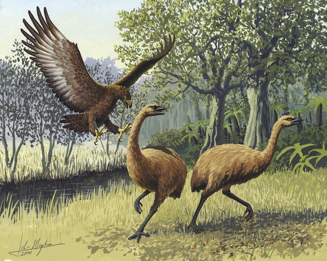 Haast's Eagle and Moa