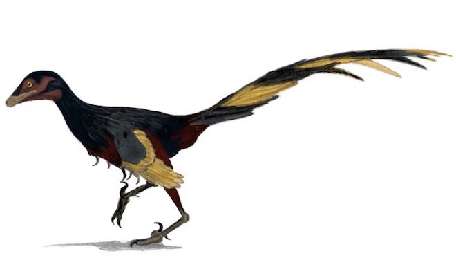 Jinfengopteryx
