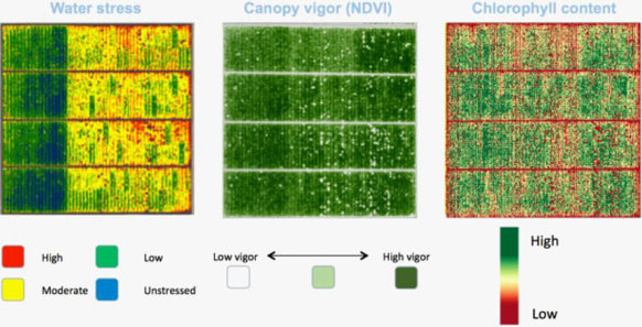 Ceres images from a 160-acre almond study.