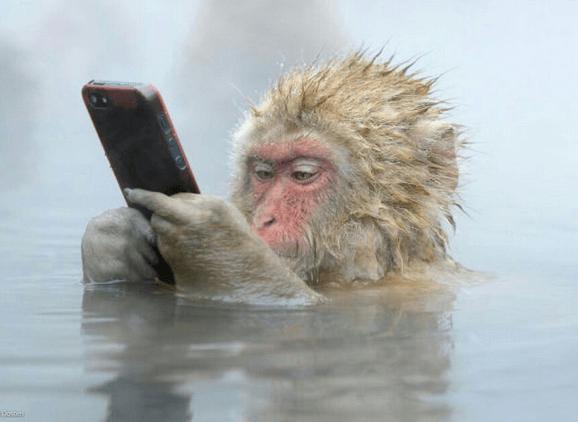 water-prrof-phone