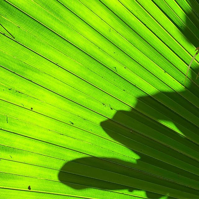 Palm frond almost electric in colour.