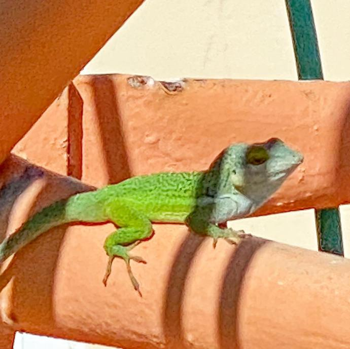 A lizard sitting off in the morning sun on a communications tower.