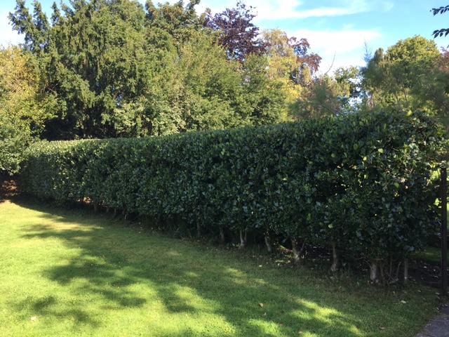hedging 3