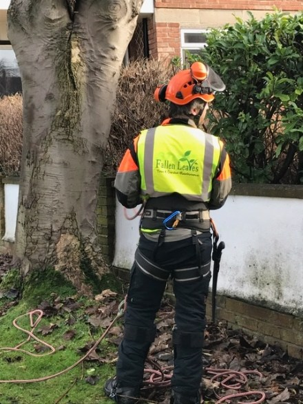 Wirral Tree Surgeon