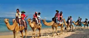 bali camel safari naik unta di bali