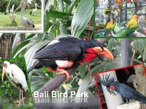Bali Bird Park (Taman Burung Bali)