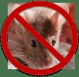 No Mice