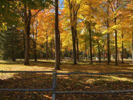Fall Campground