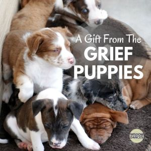 Image depicts a pile of puppies. They are so cute!