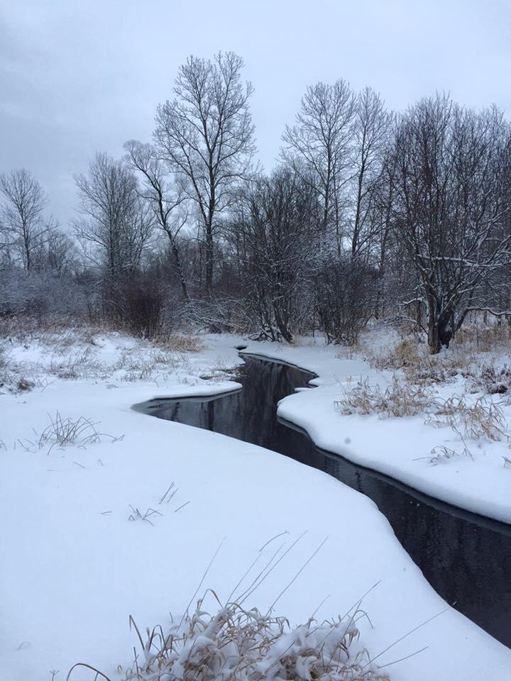 Bayside Creek – January 2016