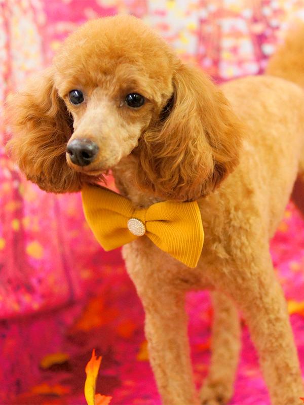 人気犬種 トリミング・シャンプー 料金(税別) トイプードル 顔バリカン