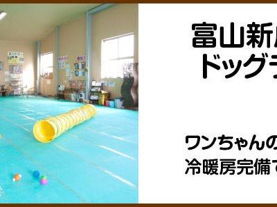 富山店 室内ドッグラン 冷暖房完備で夏も冬も快適