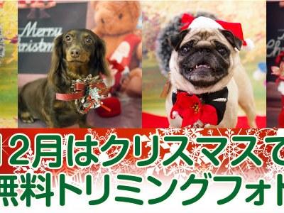 年に1度のサンタ帽!ワクワクのクリスマスでワンちゃんを可愛く撮影