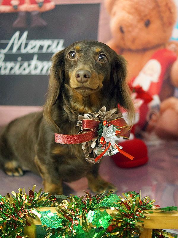 12月:クリスマス