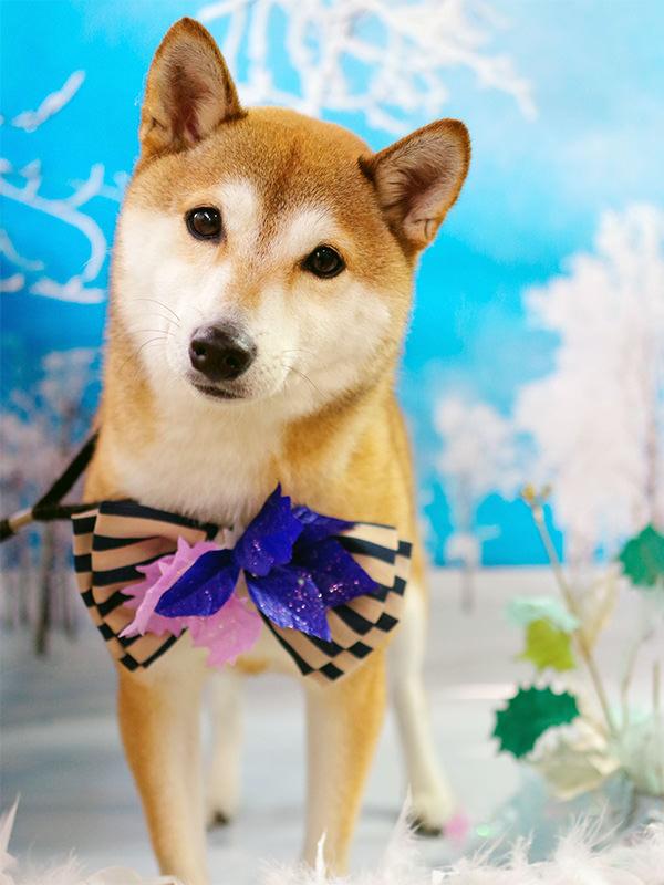 雪降る寒い冬でもワンちゃんの元気でキュートな写真を無料撮影!