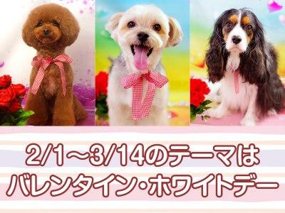 愛情たっぷりバレンタイン・ホワイトデーでキュートに無料撮影!