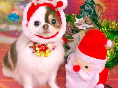 Merry Christmas☆聖なる夜をワンちゃんと一緒に過ごそう♪