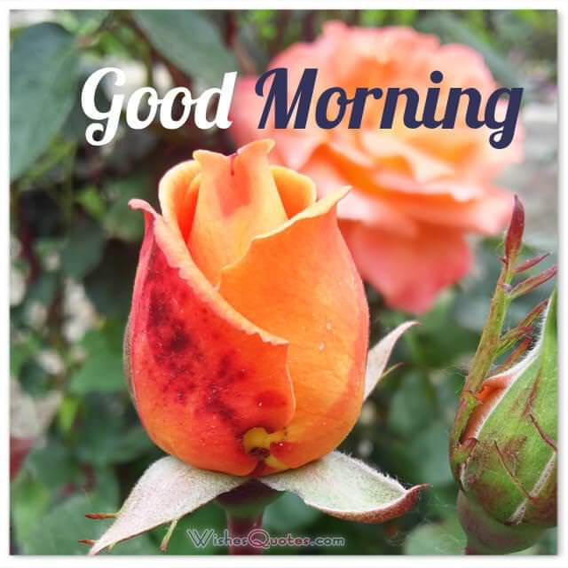 200 Sweet Good Morning Messages With Adorable Images