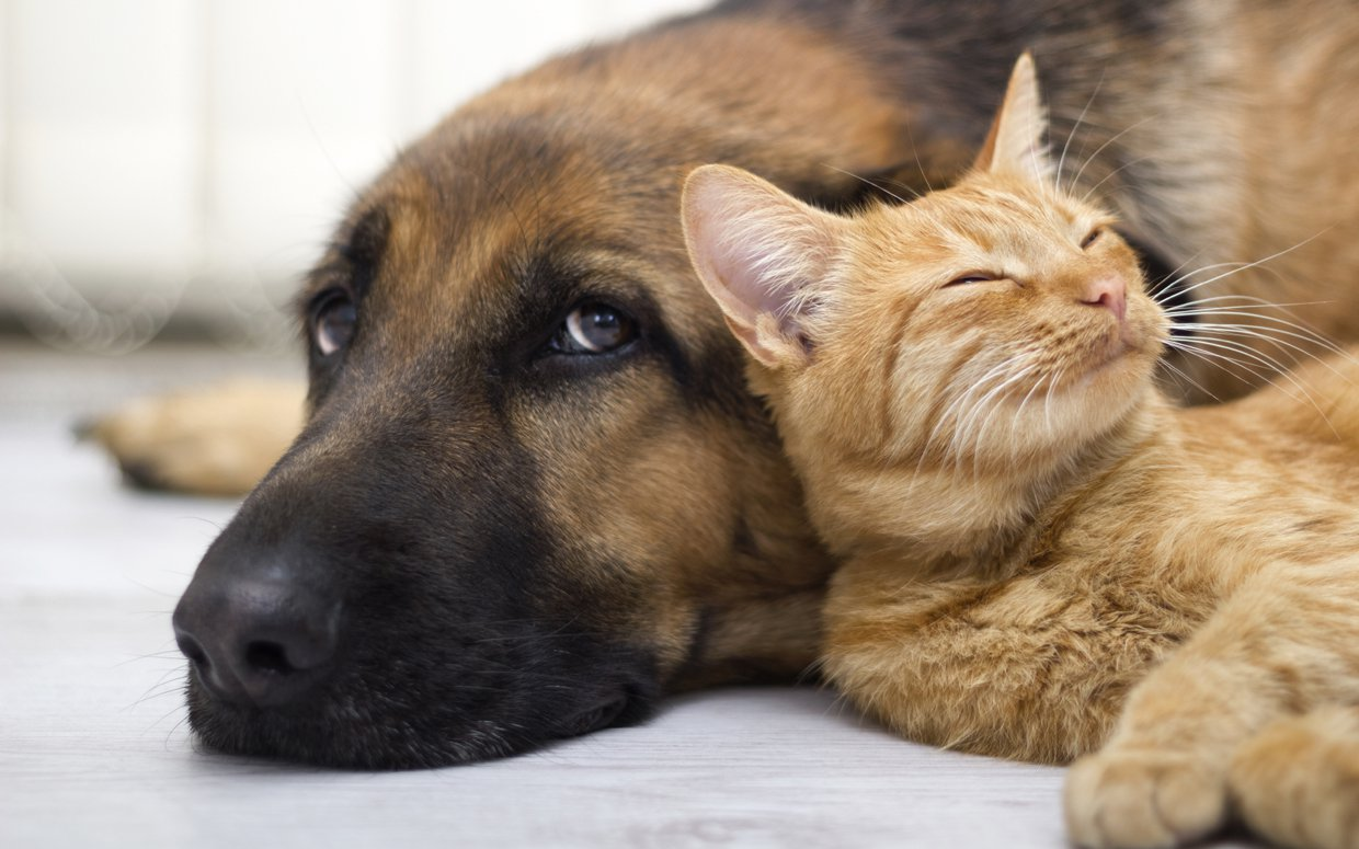 Things You Should Know When Your Dog And Cat Live Together