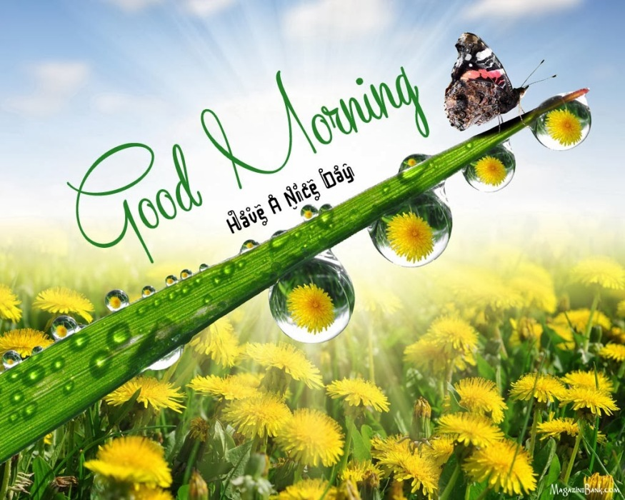 Good Morning Have A Nice Day A Head