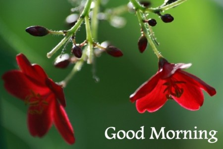 Good Morning Wishes With Flowers Pictures  Images   Page 5 Good Morning   Beautiful Red Flowers wg16146