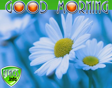 Good morning images with blue and white flowers bedwalls morning with white flowers good morning mightylinksfo