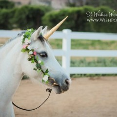 Pale Gold Unicorn Horn for Horse Pony