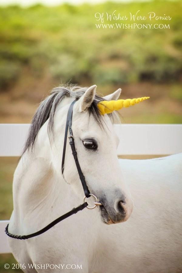 Pure Gold Bright Gold Unicorn Horn For Mini Pony Horse Draft