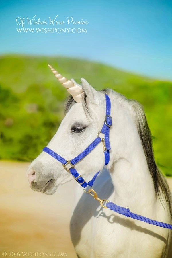 Champagne Unicorn Horn