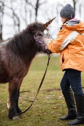 Unicorn horn pony